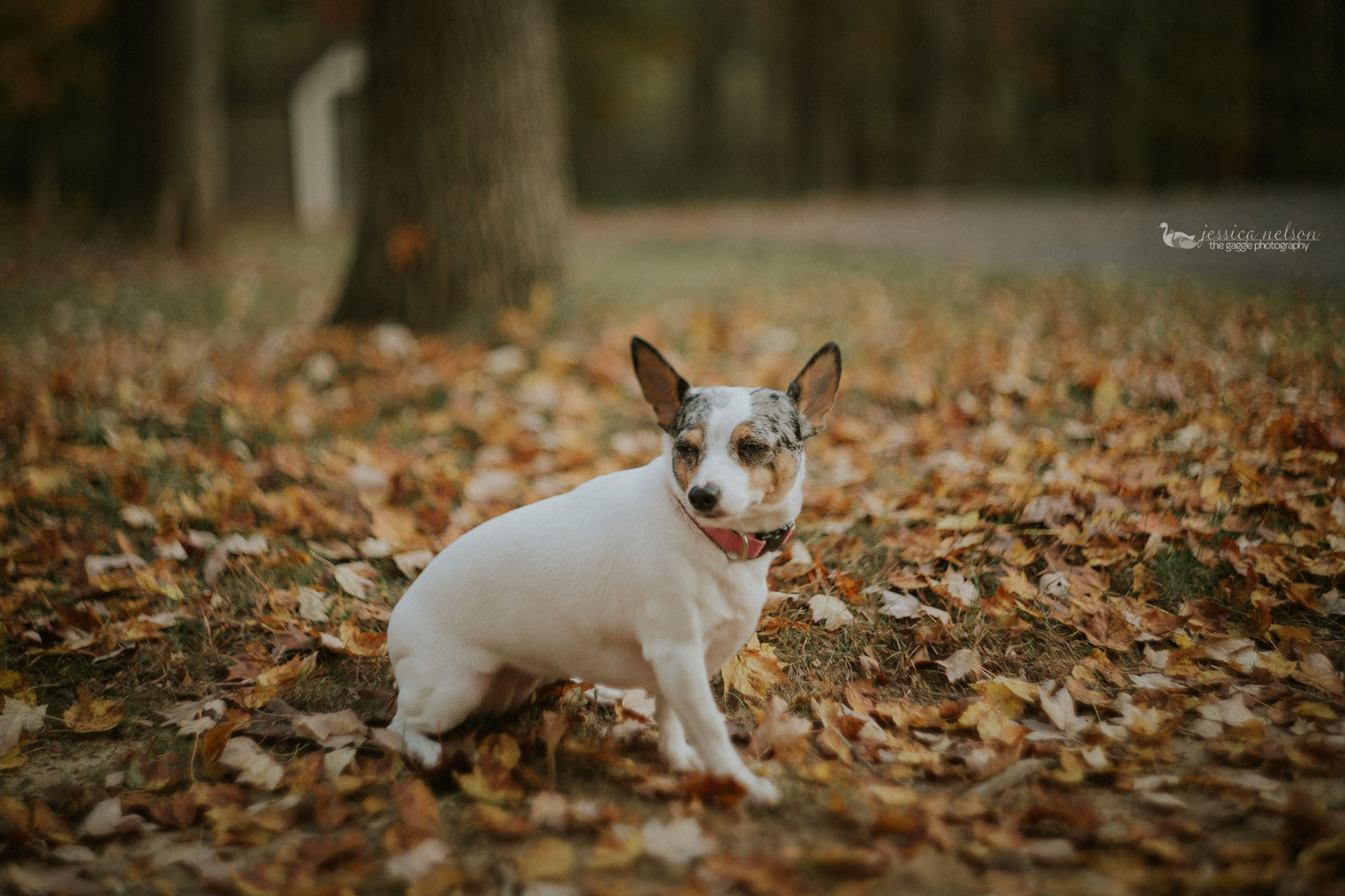 freelensed picture of a dog by Jessica Nelson