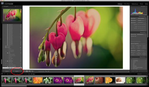 how to export your photos from Lightroom by Monica Wilkinson
