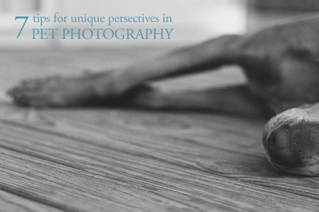 7 tips for unique perspectives in pet photography