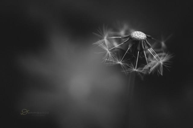 macro flower photo by Emma Wood