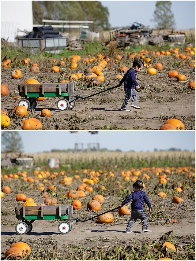 pumpkin searching at the pumpkin patch by Kellie Penn