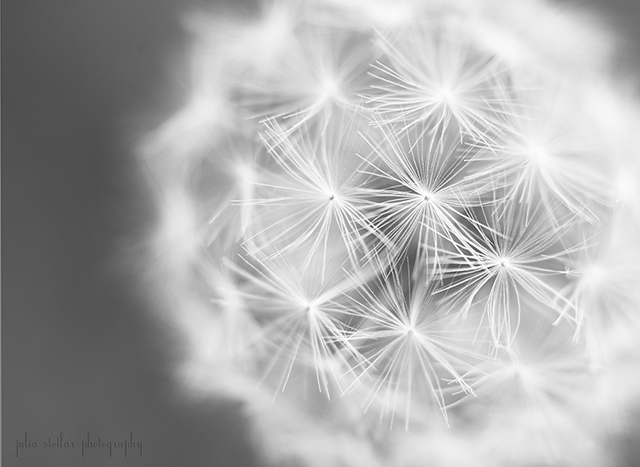 black and white macro photography by Julia Stotlar
