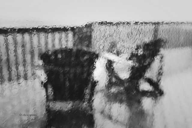 black and white rain photography through glass by Elicia Graves