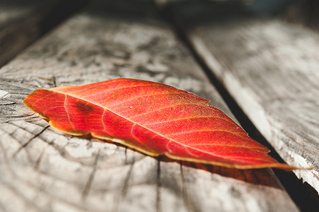 fall photography inspiration by Danielle