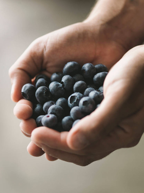 blueberries in hands photograph by Matt Armendariz