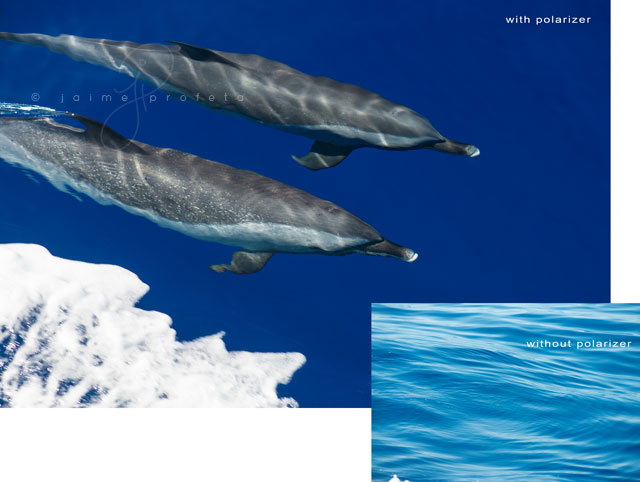dolphins photo using a polarizer by Jaime Profeta