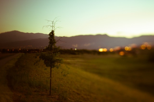 tilt shift tree by Sarah Wilkerson