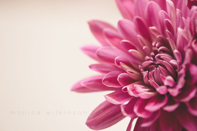 pink floral macro photography by Monica Wilkinson
