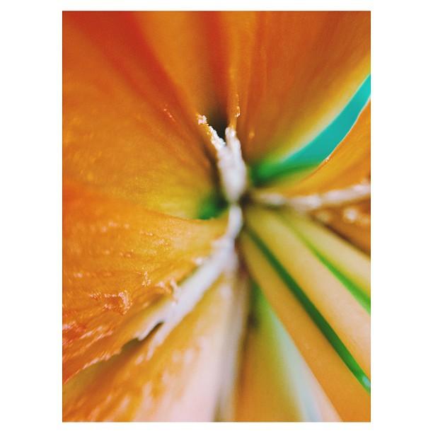 olloclip macro flower instagram photo by minski39