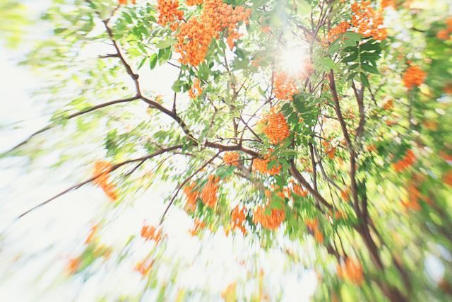 lensbaby photography project of Caroline Jensen