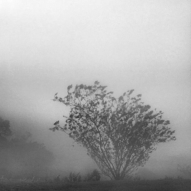 foggy tree instagram photograph by giselerampazzo