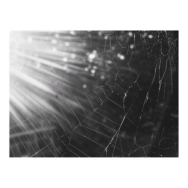 backlit spiderweb instagram picture by nlmonaco