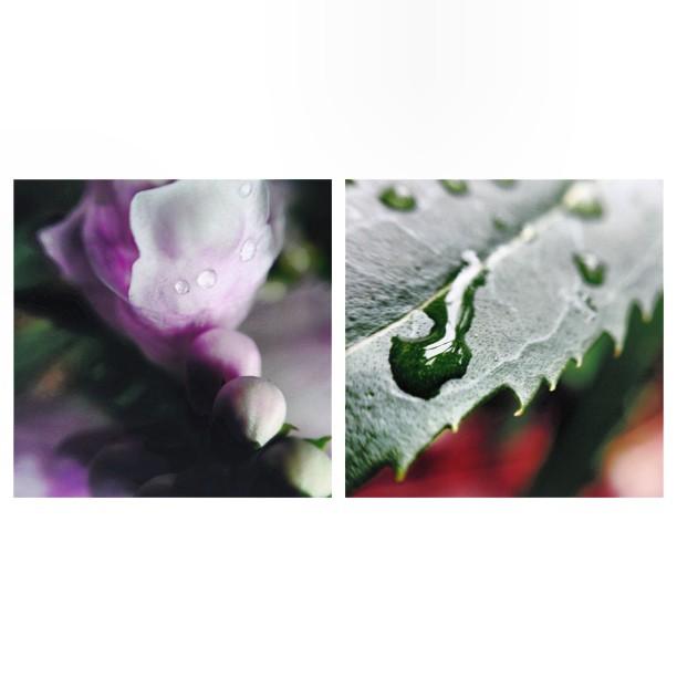 floral macro instagram photography by jenntaranto