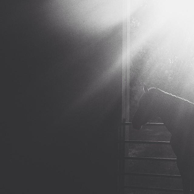 backlit horse instagram picture by drewjj