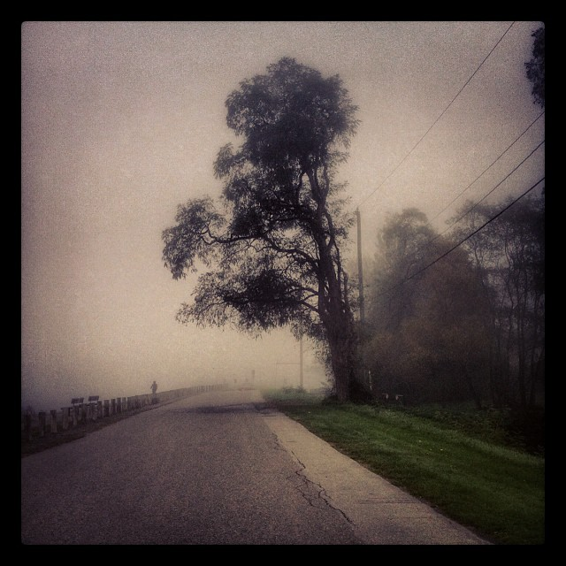 fog and tree instagram photo by sabcgirl