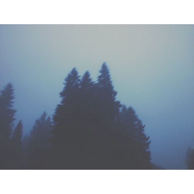 foggy trees instagram picture by kirafaris