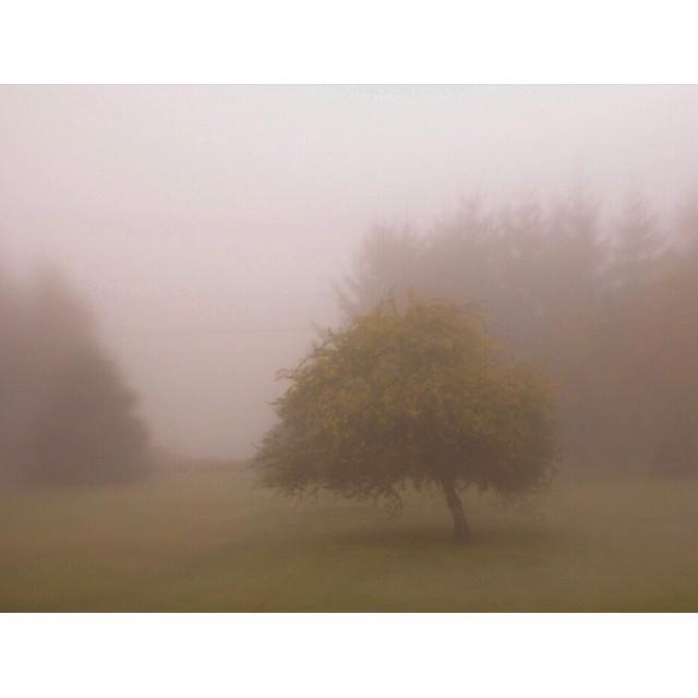 tree in fog instagram photograph by carmenmariez