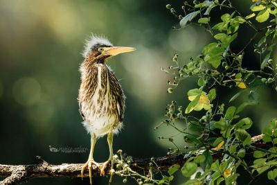 Today we have Jessica Nelson, Click Pro and a wonderful nature photographer, joining us to share just a few of her favorite things.