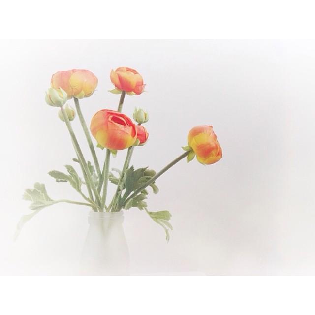 vase of flowers instagram pic by sara_turek