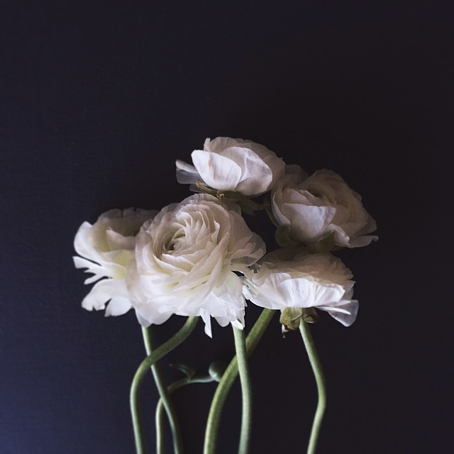 white ranunculus instagram photograph by maisyd