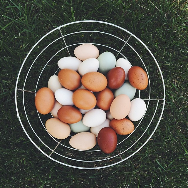basket of eggs instagram pic by cuteandpeculiar