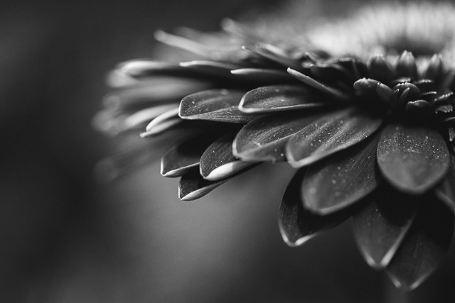 macro flower photo by Kristy Dooley