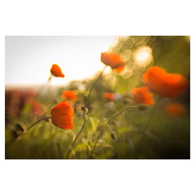 orange flowers instagram pic by carmenmariez