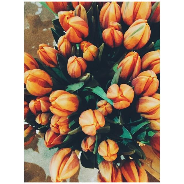 orange tulips instagram photo by annafromriga