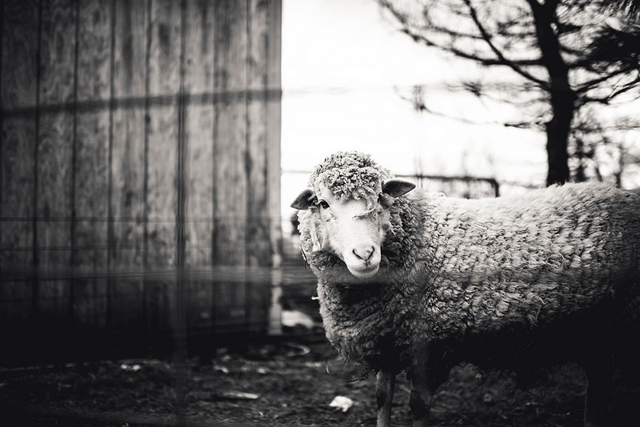pet photo by CandyKempsey