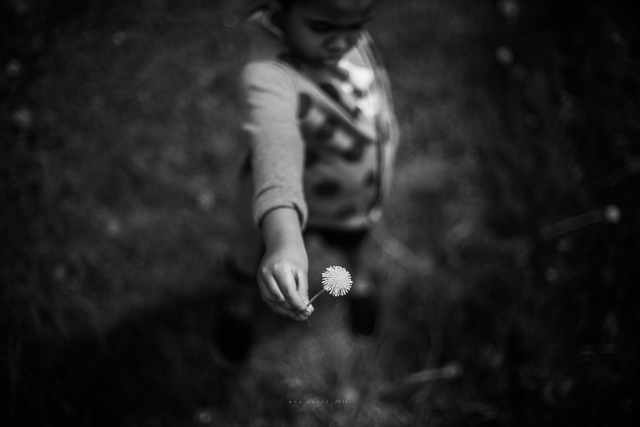 child holding dandelion pic by Ana Myer