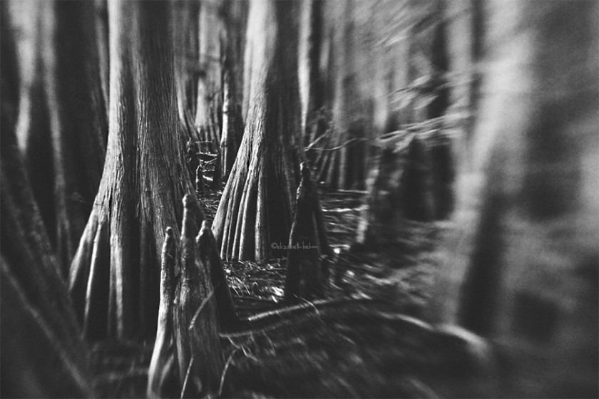 black and white lensbaby photo by Liz Behm