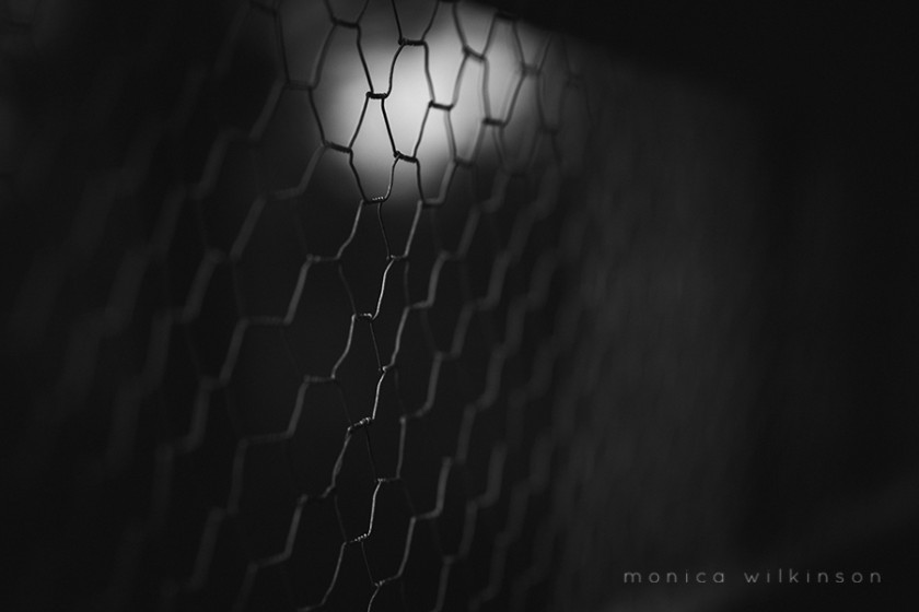 chain link fence photo by Monica Wilkinson