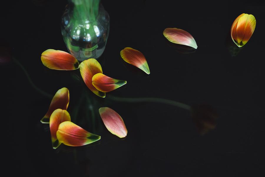 fallen tulip petals photo by Lisa Benemelis