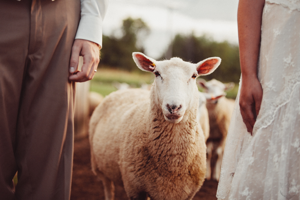 bride and groom photo with a sheep by Jessica Lutz