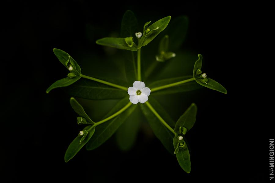 flower photo by Nina Mingioni