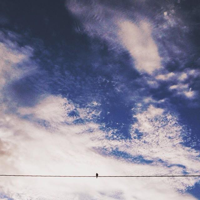 bird on a wire instagram photograph by kmledford