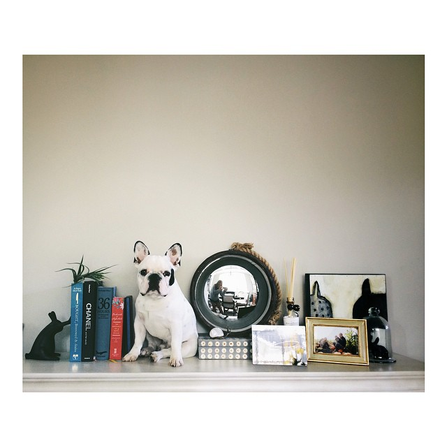 dog as a bookend instagram photograph by kdokoza