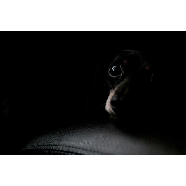 dog instagram photo by arekeworkuphotography