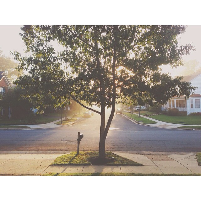 backlit tree instagram photograph by robertsonjenn