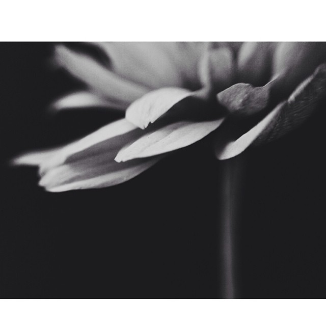 black and white flower instagram photo by loridozierphoto