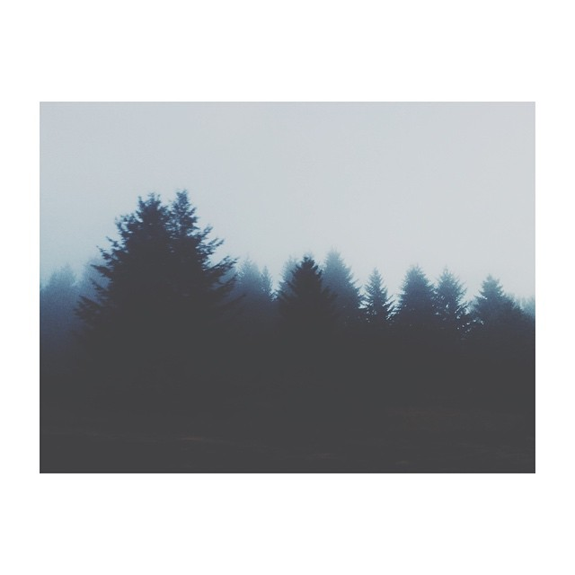 dark and foggy trees instagram photograph by kirafaris
