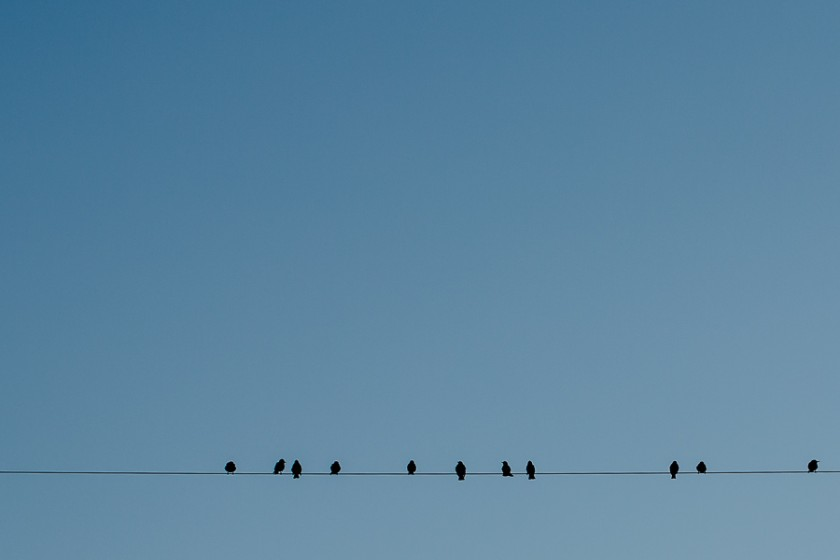 Birds-on-a-Wire-by-Kathy-Roberts
