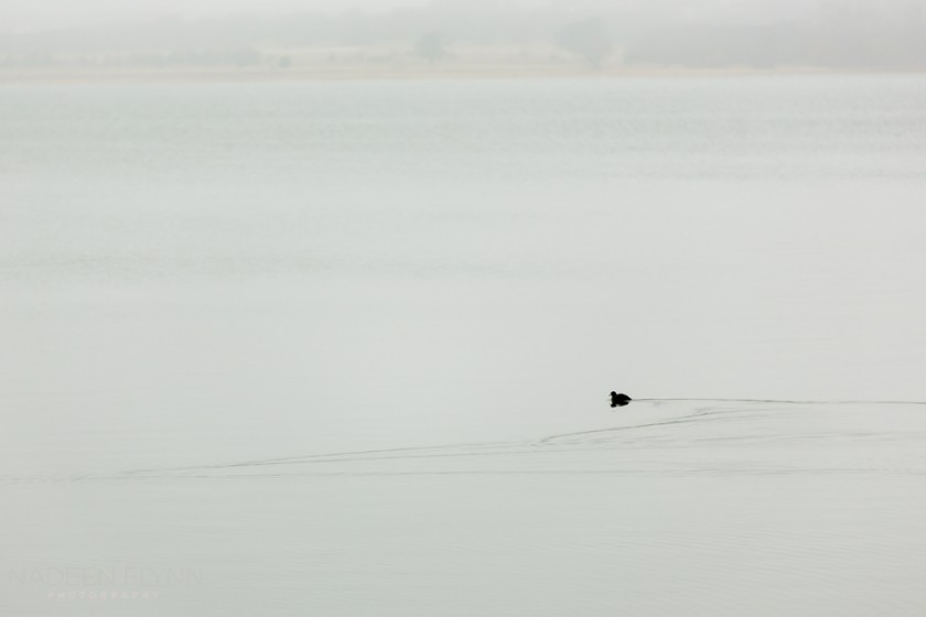 Minimalist-Duck-on-Lake-by-Nadeen-Flynn