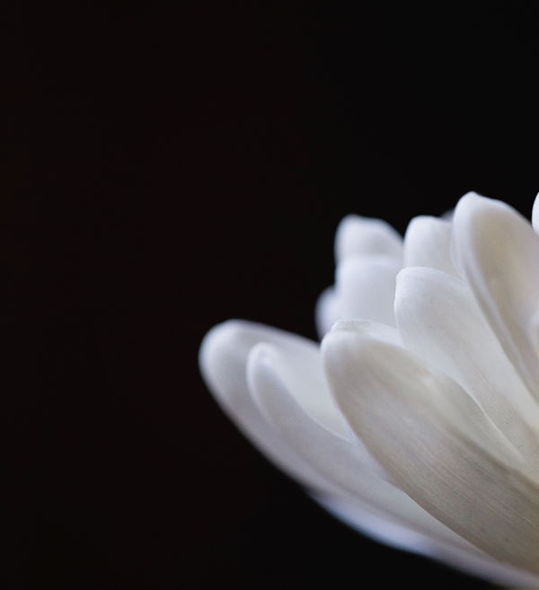 White-flower-by-Christa-Paustenbaugh