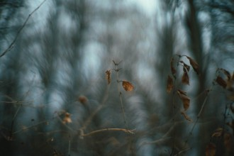 leaf-on-a-limb-photo-with-a-Canon-50mm-f.95-by-Caroline-Jensen-840x561