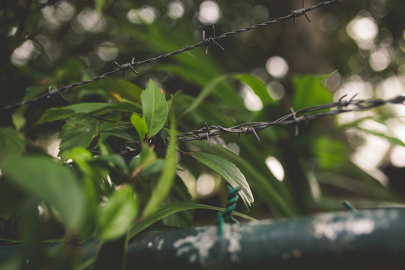 barbed-wire-in-foliage-by-Genevieve-Guerin