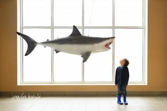 child looking at shark display by Jennifer Bogle