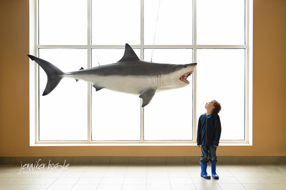 child looking at shark display by Jennifer Bogle