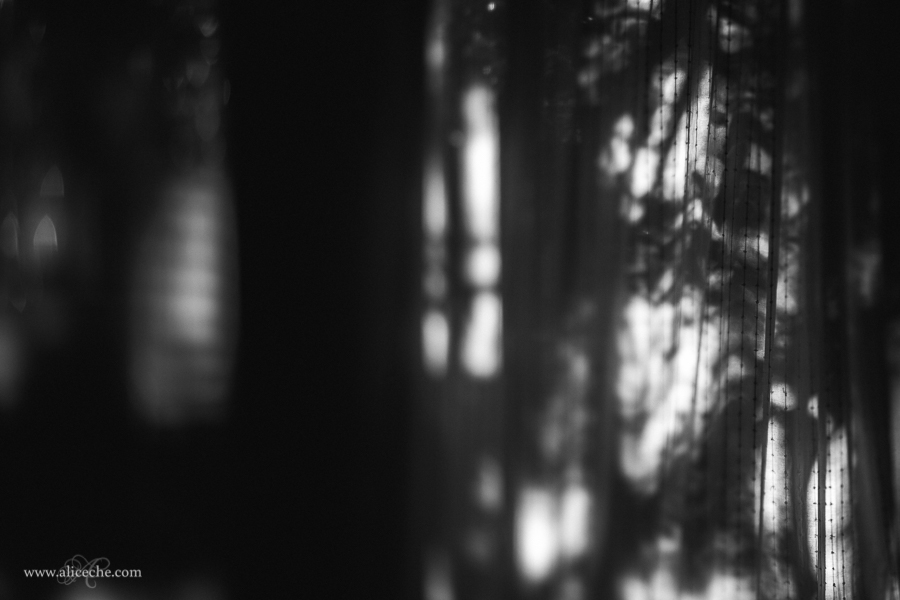 out of focus black and white photo by Alice Che