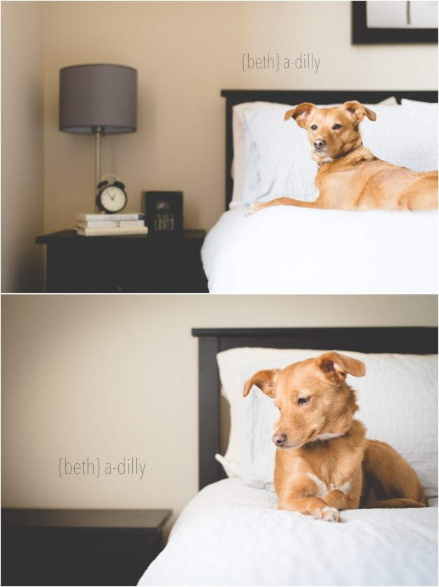 before and after of dog photo on bed by Beth Deschamp of Bethadilly Photography